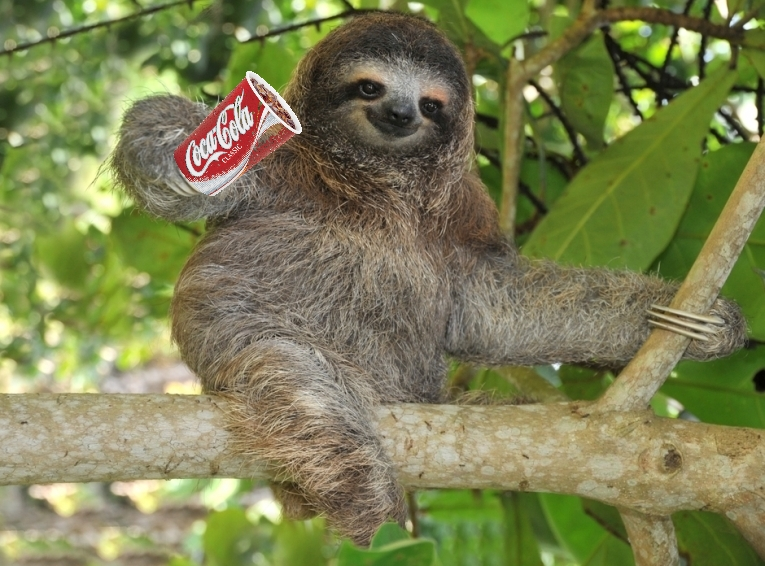 pygmy-sloth-mangroves_71212.jpg